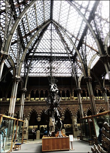 Natural History Museum Oxford Jobs