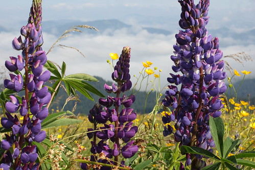 Bouquet of Carpathians mountains | by Inna_Z