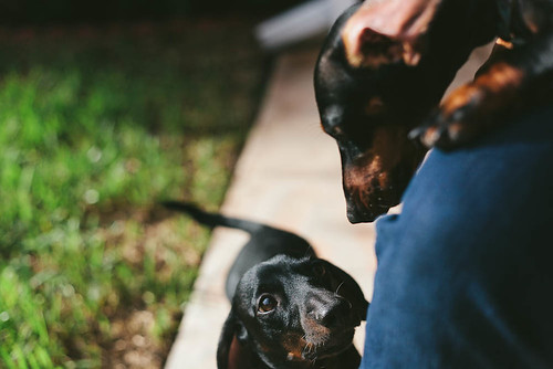 Pups | by ISLuis