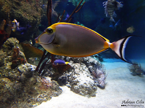 sea life aquarium -- london | by Drinu C