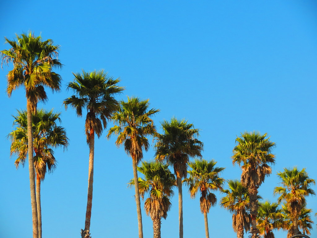 California Palm Trees Wallpaper Background 1 HD Wallpapers ...