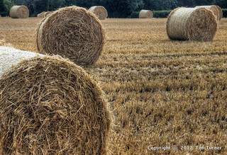 A Load of Bales | by TimsPicsCornwall back Drekly