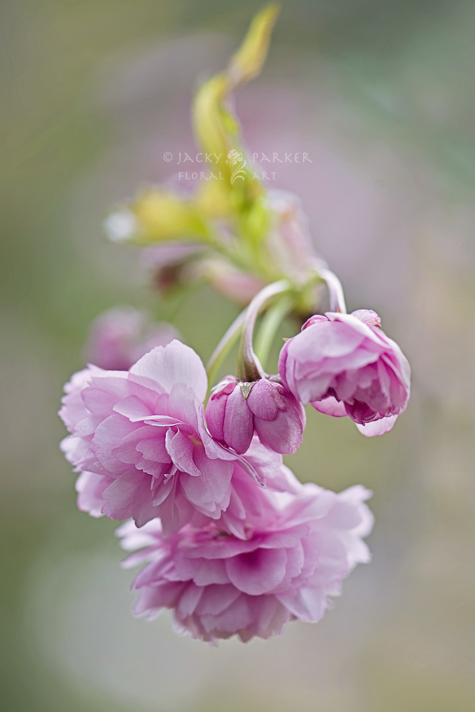 Photograph Simply Spring by Jacky Parker