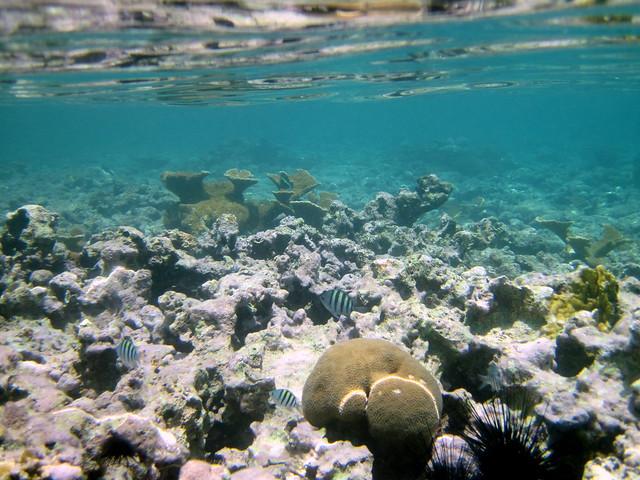 Snorkeling, Sapphire Beach, St. Thomas, US Virgin Islands ...