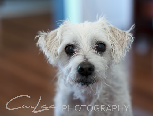 Bailey Boy | by ~ CarLee Photography ~