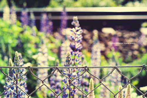 Day 167/365: Happy Flowery Fence Friday | by jennydasdesign