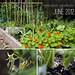 paulik_garden1_june2012