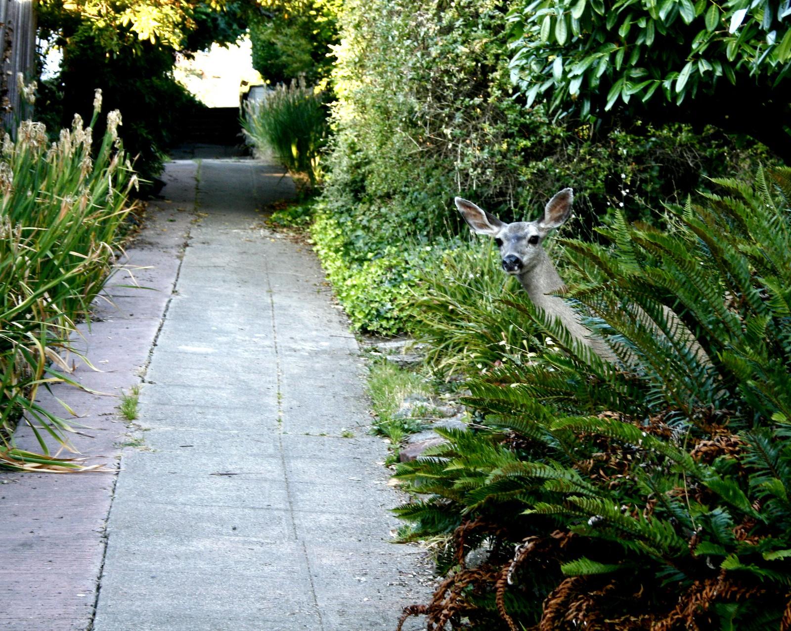 Public path #3   by TJ Gehling