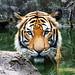 Malacca Zoo, Malaysia