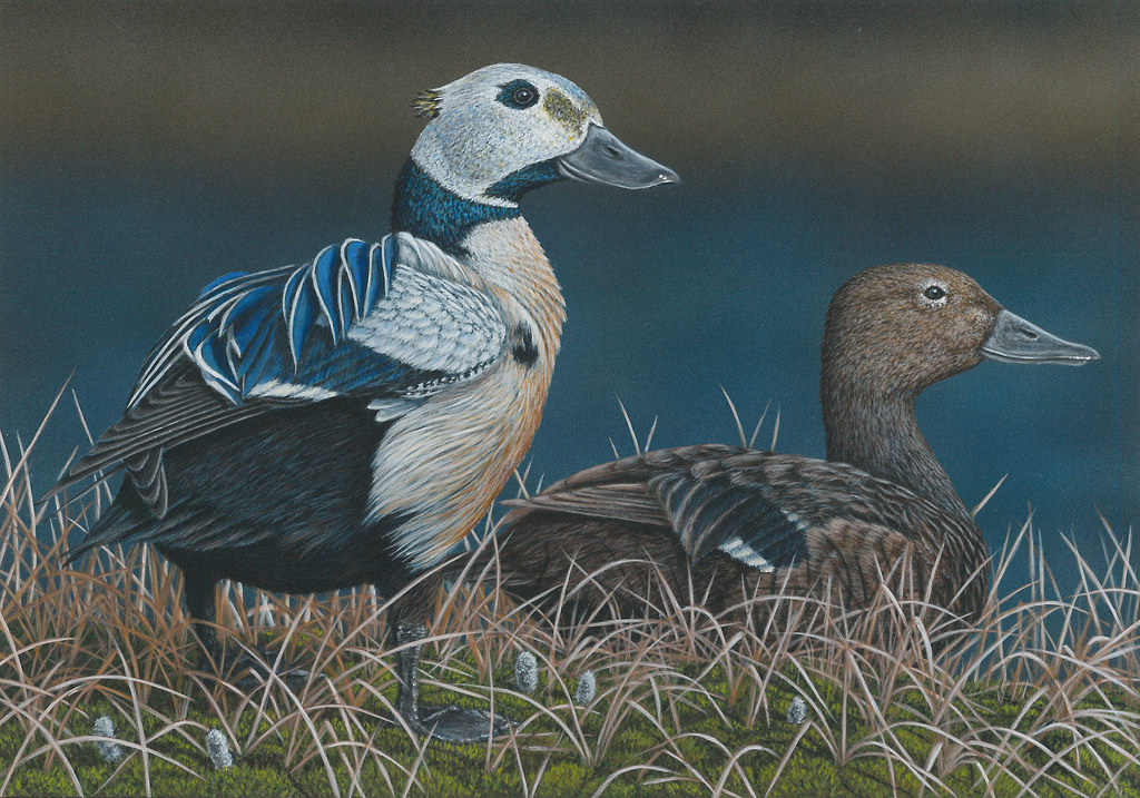 2016fdc072 2016 federal duck stamp art contest entry 72 for Deer duck fish