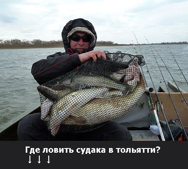 Где ловить судаков в самаре? Судака запретят ловить Рыбу запрещают вылавливать
