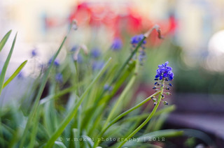 HBW! | by w.mekwi photography [here & there]