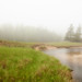 Foggy Day in Acadia