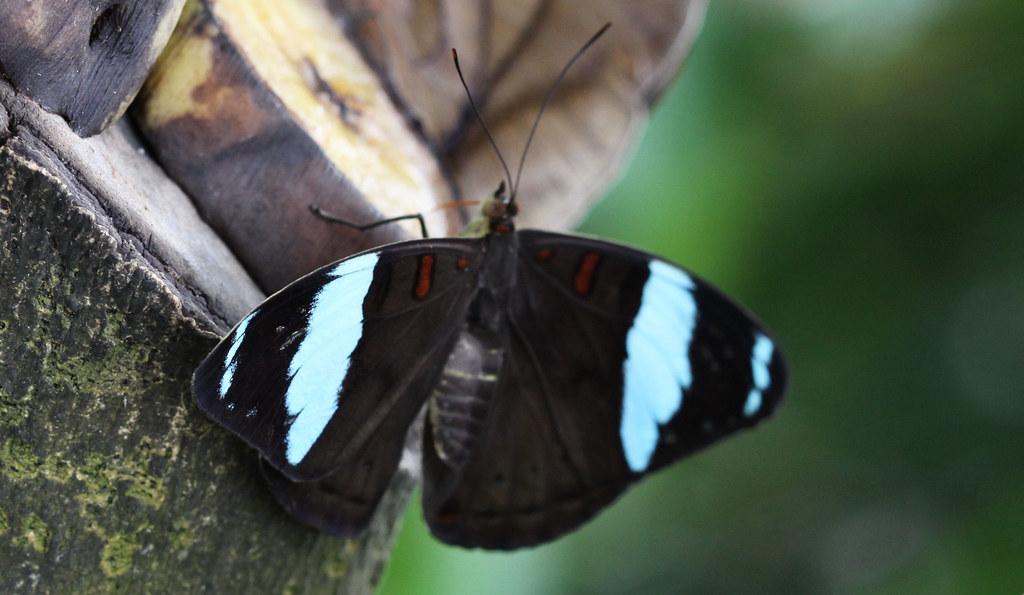 Schmetterlinge Futterung 03 Falter Grunling Fotografiert Flickr