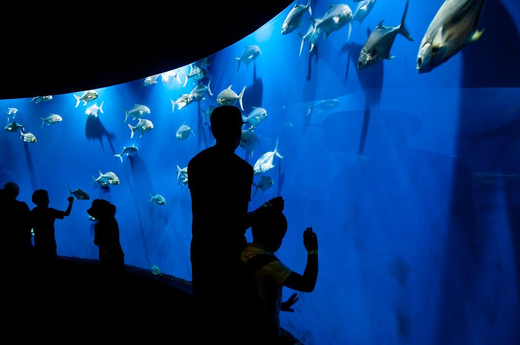 Aquarium At The Omaha Henry Doorly Zoo Aquarium I