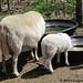 Random lamb snaps 9 - FarmgirlFare.com