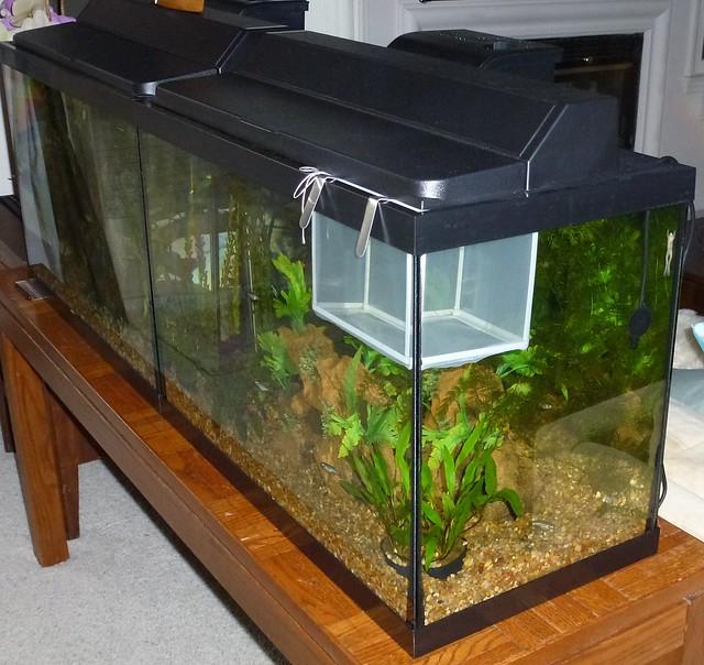 Fish breeder net and my little breaststroker flickr for Fish breeding net