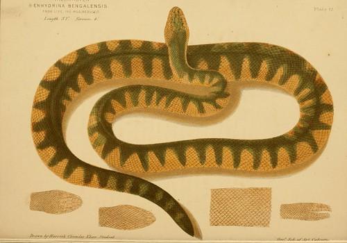 snakes n73