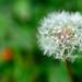 Make a Wish (EXPLORED 11-06-12 #428). By R J Watson
