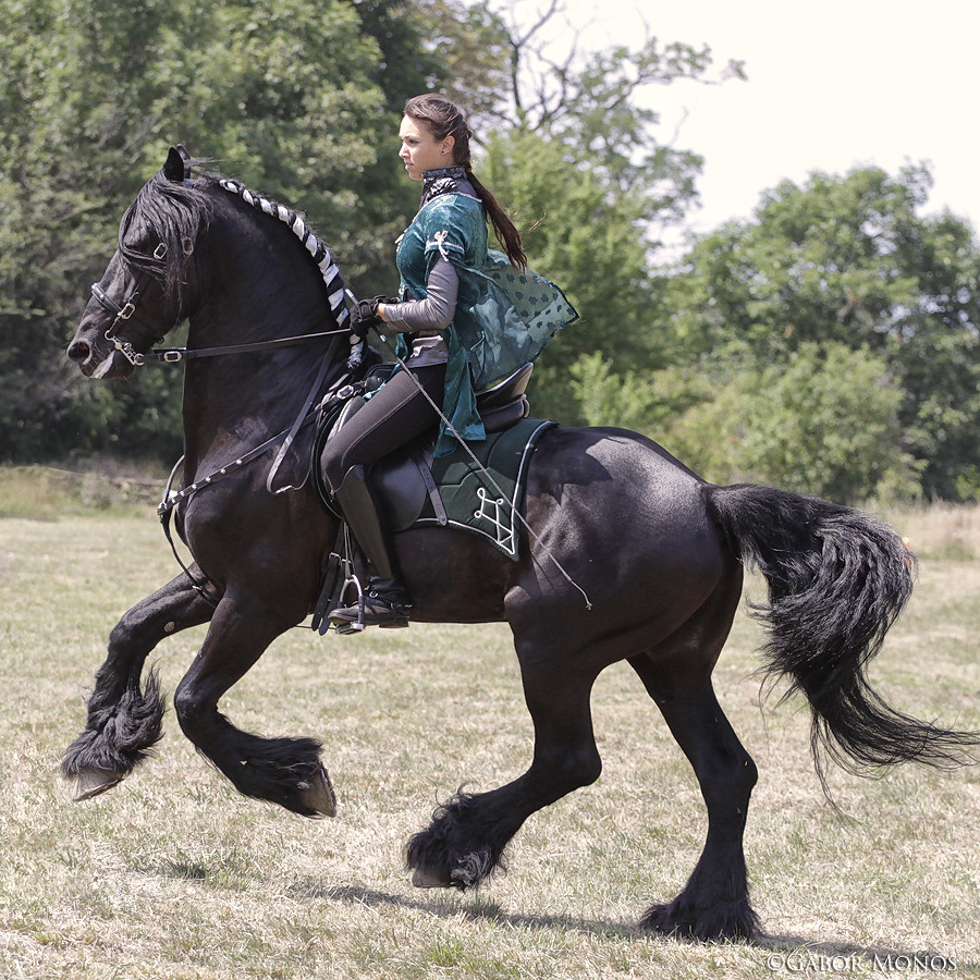 Friesian Horse Show Gabor Monos Flickr