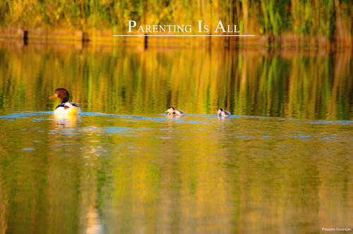 Parenting is all~Explored 31052012 | by Prasanna Gururajan