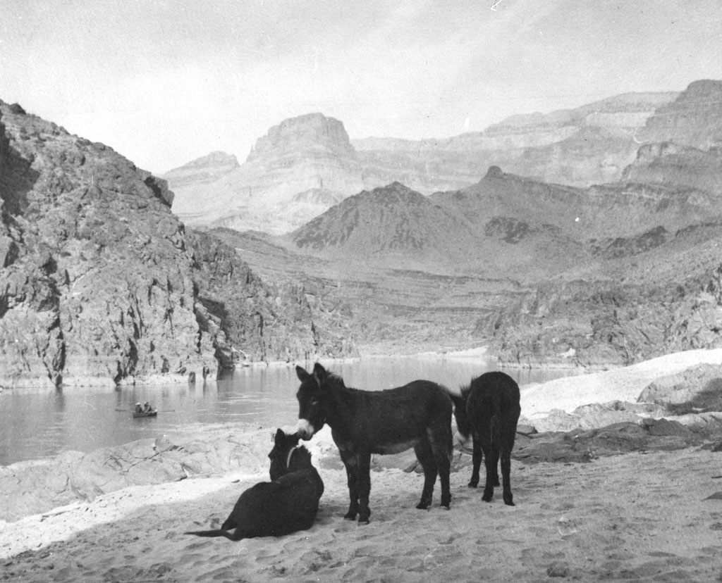 grand canyon mules with Lightbox on Mohave2 l moreover Scenic Drives together with Grand Canyon National Park likewise I0000MwabSjfofUM additionally Americas Best Swimming Holes.