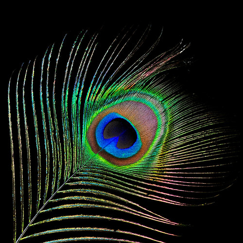 Iridescent Feather | by Bill Gracey