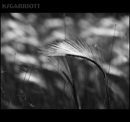 soft as | by KSGarriott