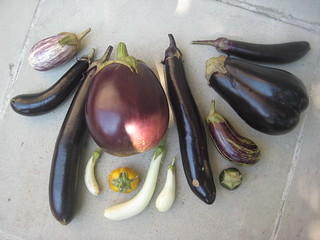 Eggplants | by Brooklyn Botanic Garden