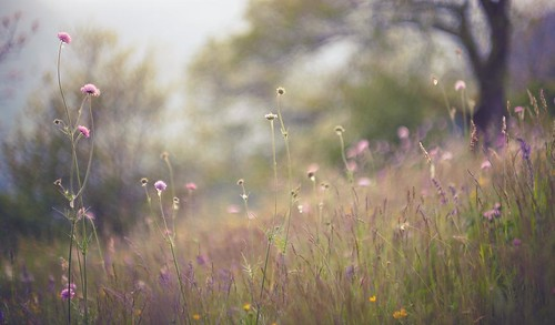 feminine morning over young summer-meadow | by dapalmerpeter (slow & low)