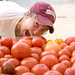 Shonda eating Gibbs Road Farm tomatoes (June 2012)
