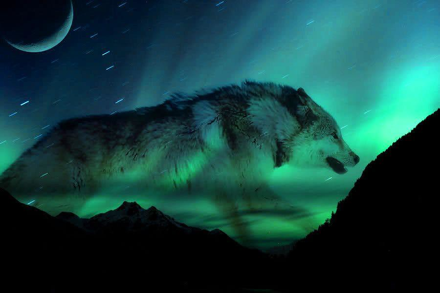 real northern lights wolf - photo #32