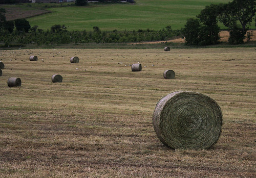 Haybales | by jessica-h