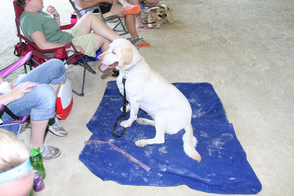 Linn County Dog Control Adoptable Dogs