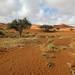 Desert (Sossusvlei)