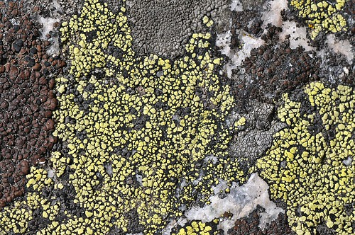 lichen | by theilr