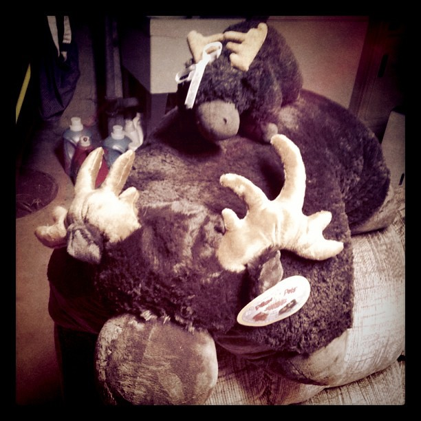 My Legit JUMBO Chocolate Moose Pillow Pet From Babe For