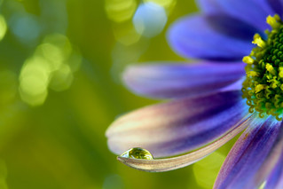 water drop@different colors | by kiki_chi