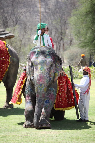 Elephant Polo Maharajas Express | by Indian Luxury Trains