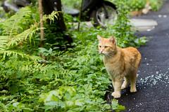 cat 019