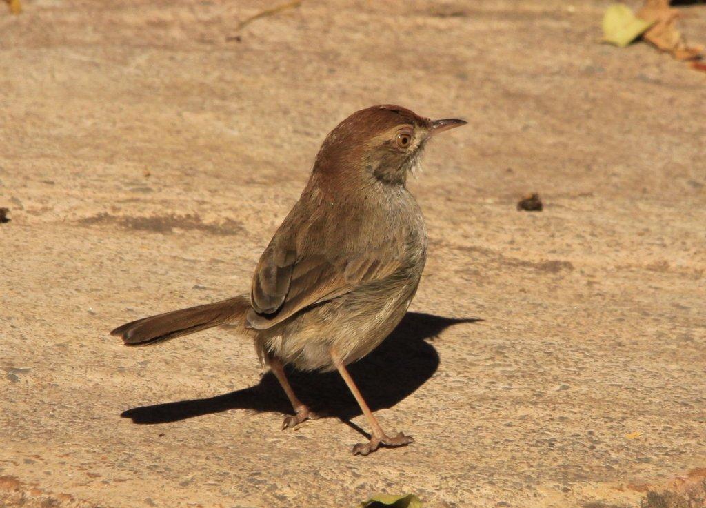 Birds At Walter Sisulu Botanical Gardens Garden Ftempo