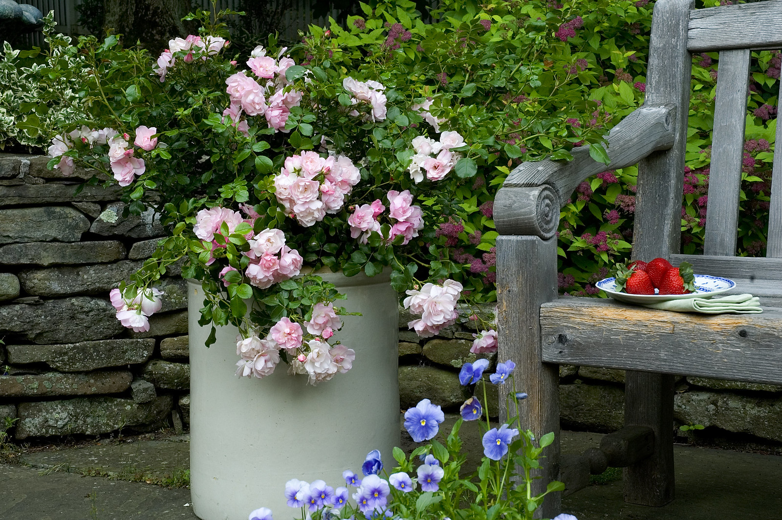Flower carpet appleblossom flickr dhlflorist Image collections