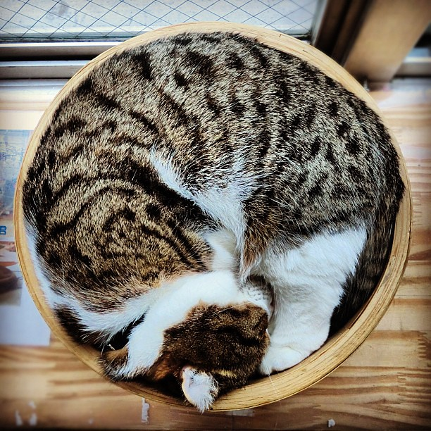 Can Cats Sleep With Only Third Eyelid Closed