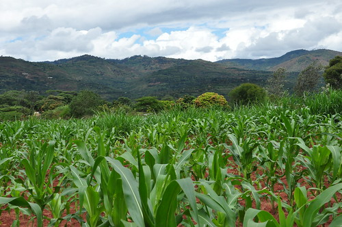A landscape view, Eastern Kenya | by CGIAR Climate