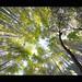 Intermingling Trees