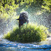 Water Dog Playing Fetch