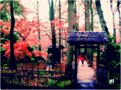 Japanese Garden, The Hague, The Netherland | by veryberry_84