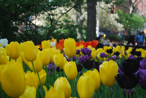 Conklin Mounment Tulips | by MadisonSquareParkConservancy