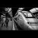 SNCF @ mainstation zurich