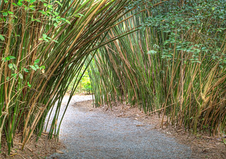 Bamboo Trail | by jwerry